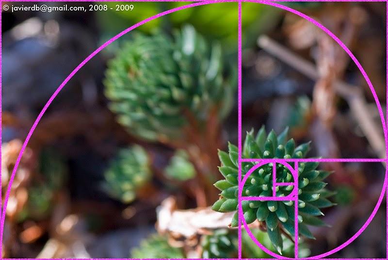 Resultado de imagen de proporcion logaritmica fotografia