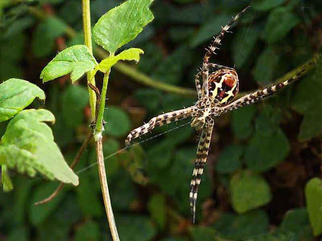 spider,garden