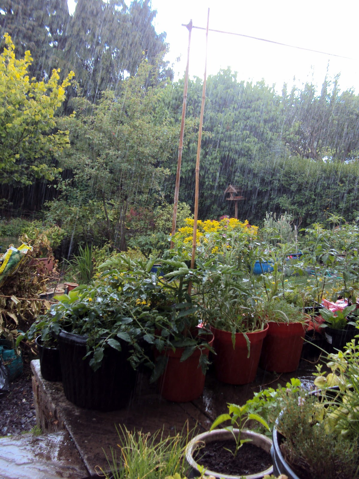 ... regularly give the garden a long soaking with a hose during dry periods.