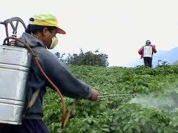 manejo de insecticidas
