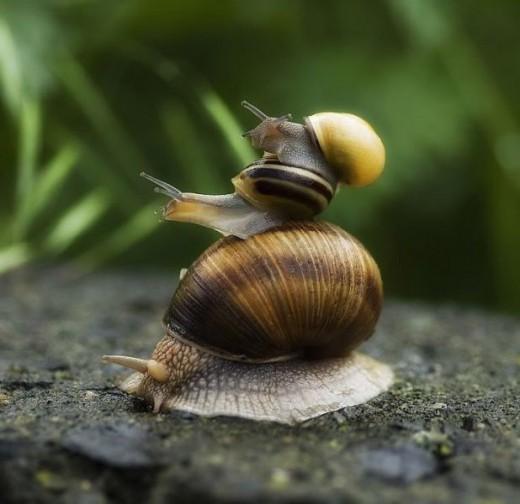 Snail riding snail riding snail