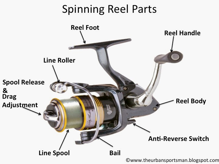 The urban sportsman understanding the different types of for How to reel in a fish