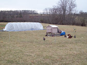 A few hens and high tunnel.