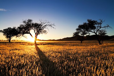 Namibia photo workshop, c4 images and safaris,
