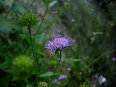 9_kwiatek.jpg