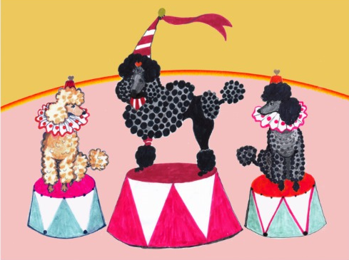 Ideal Profession - Circus Poodle