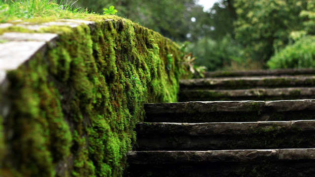 Moss Stairs HD Wallpaper