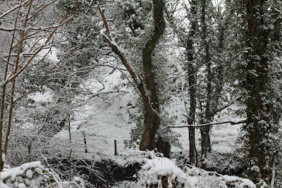 Winter February 2013, Gill Banks, Ulverston, Cumbria