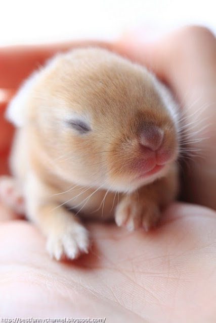 Very little bunny.