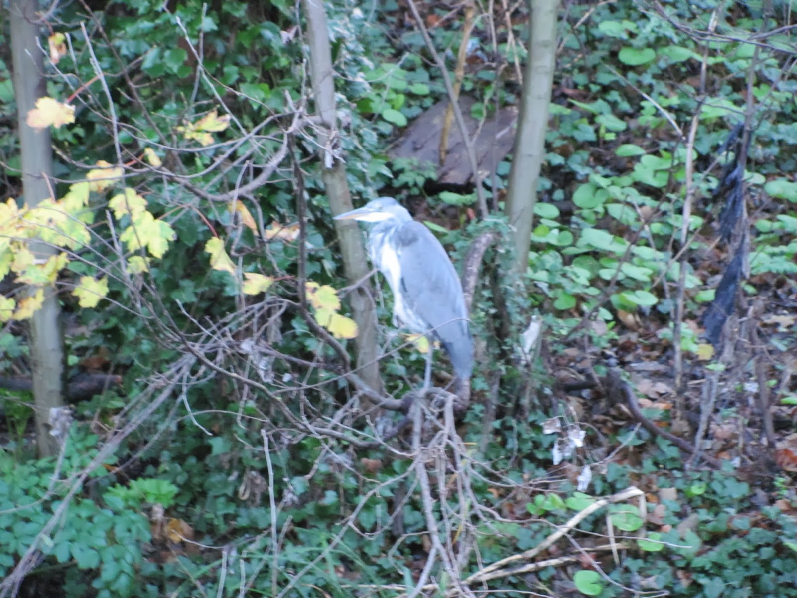 New Year's Eve with a Heron