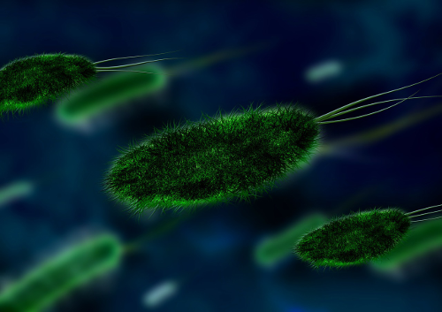 Virus i bactèries. Vacunes i antibiòtics.