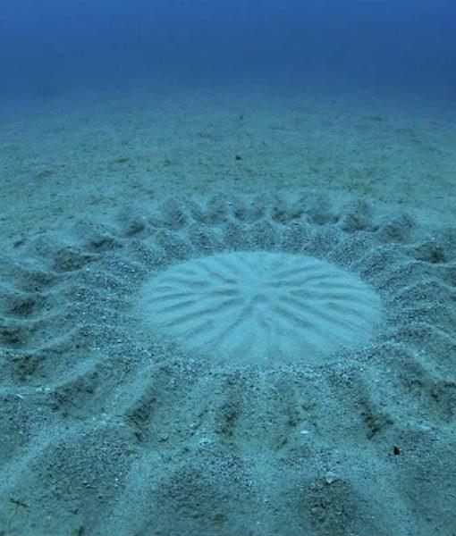 Les crop circles sous-marins