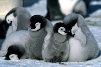 http://3.bp.blogspot.com/-SJDfjt816Wk/UBBShDq58kI/AAAAAAAADPw/9ju6dSrth_M/s1600/march+of+the+penguins.jpg