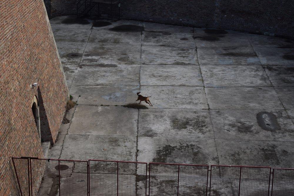 Kuče trči za lopticom u blizini košarkaških terena