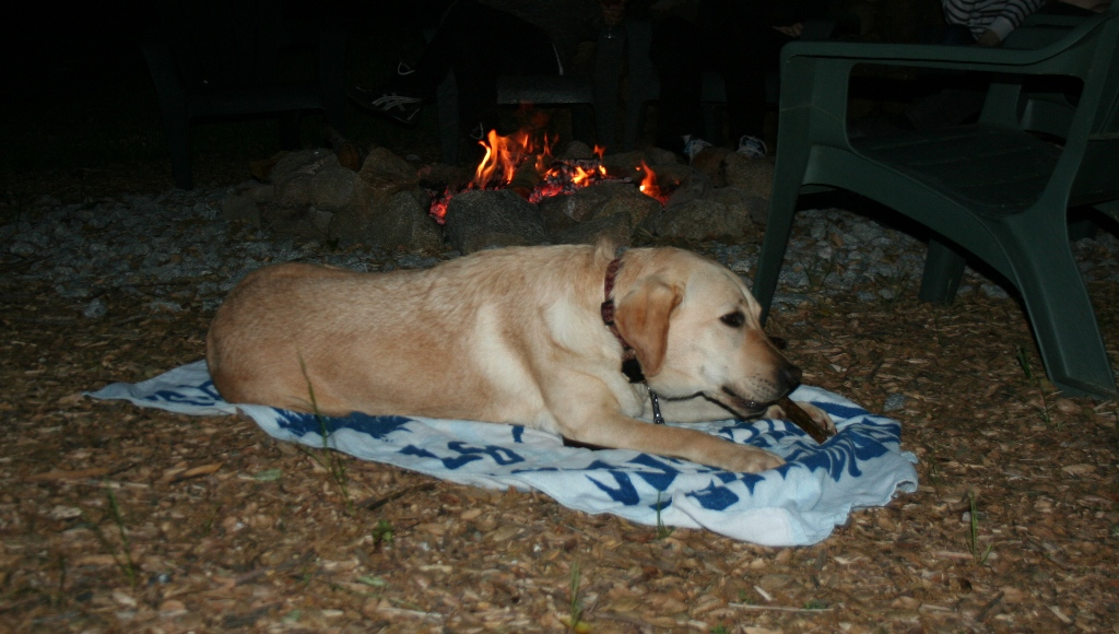 cabana on a blue beach blanket a few feet from a campfire ring with a big fire, chomping on a bully stick