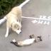 Πώς μία γάτα ''ξεγελάει'' ένα σκύλο...