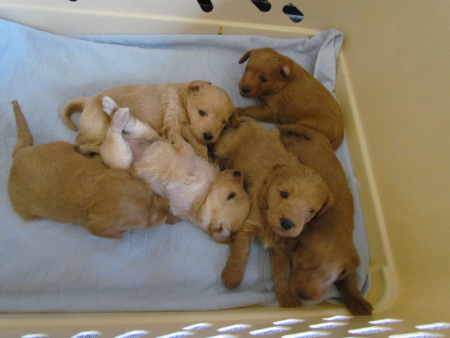 How To Get Puppies To Eat Solid Food