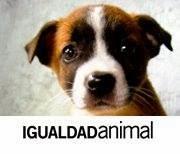 Igualdad Animal México