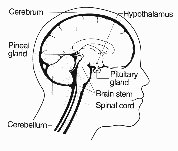 phonics and dyslexia