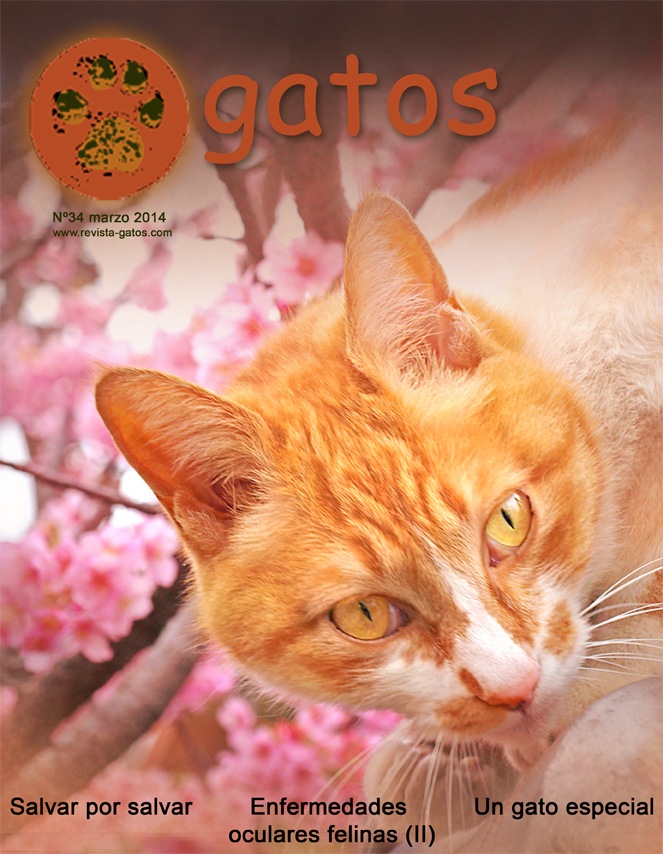 Portada revista Gatos