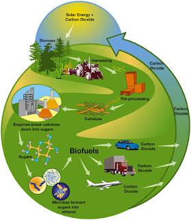 1 status implementasi bioenergi