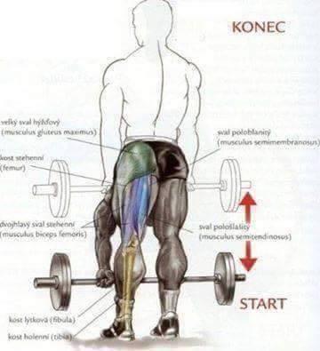 Bodybuilding weight training Exercises 4