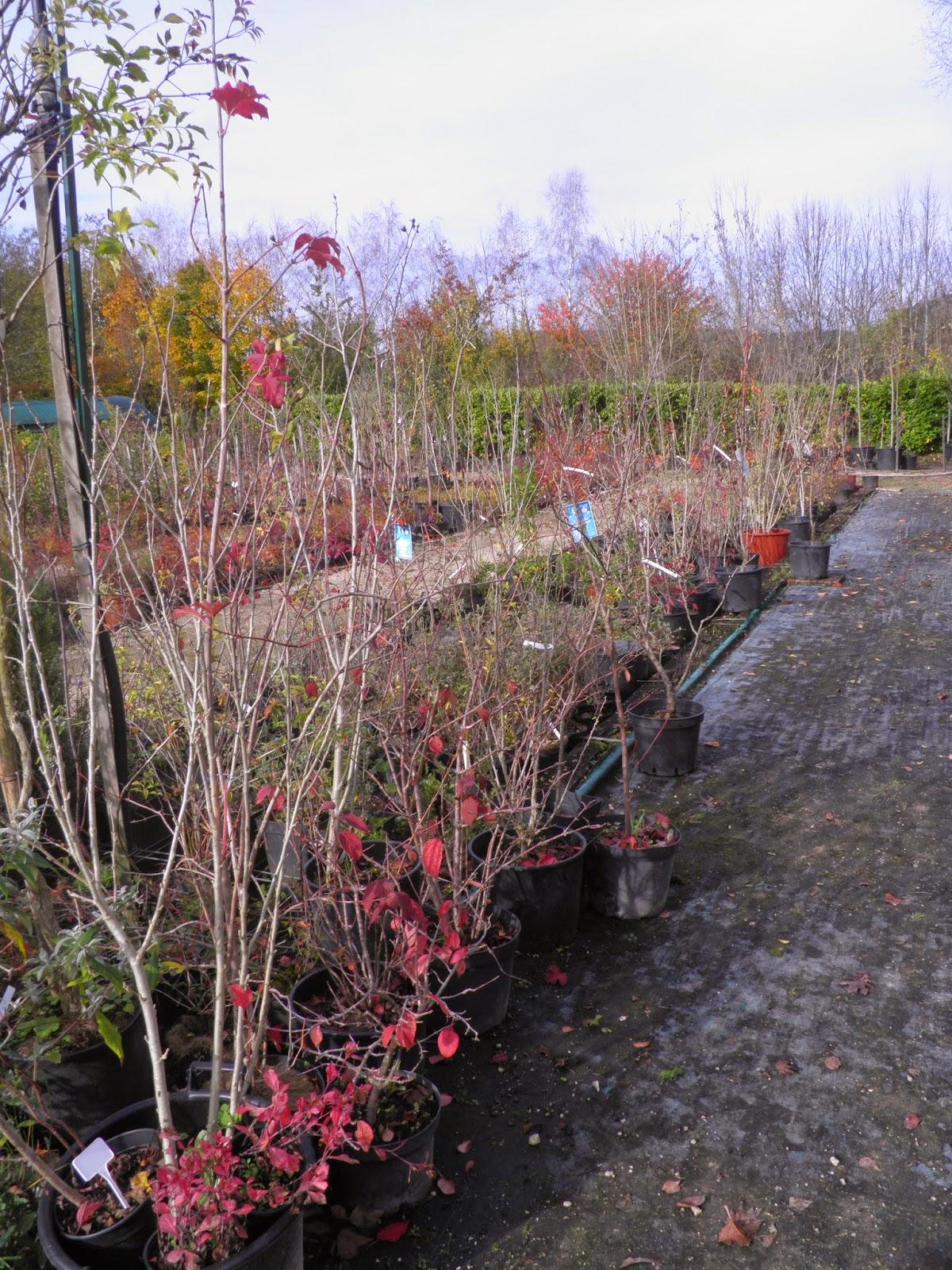 Mon jardin quercynois au jardin des d lices for Au jardin des delices