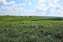 FARMLAND 167 ACRES,  SOLD