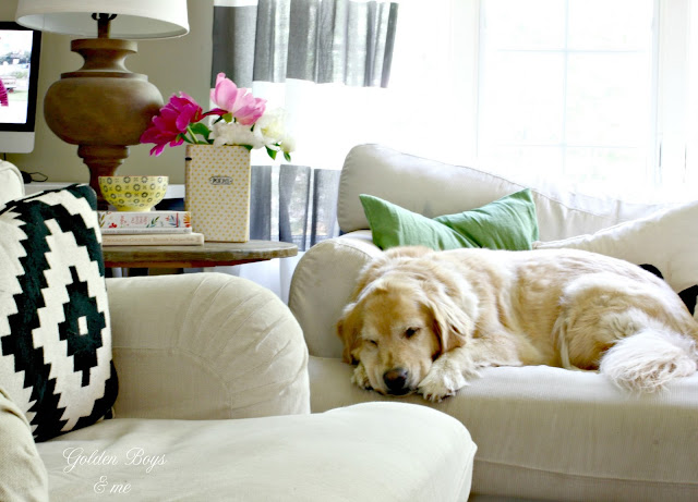 Sleeping golden retriever on Ikea furniture-www.goldenboysandme.com