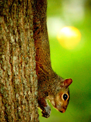 free photo of a squirrel on a tree