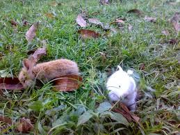memberi perhatian khusus pada kelinci