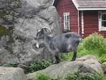 Toivosen eläinpuisto ja talonpojanmuseo