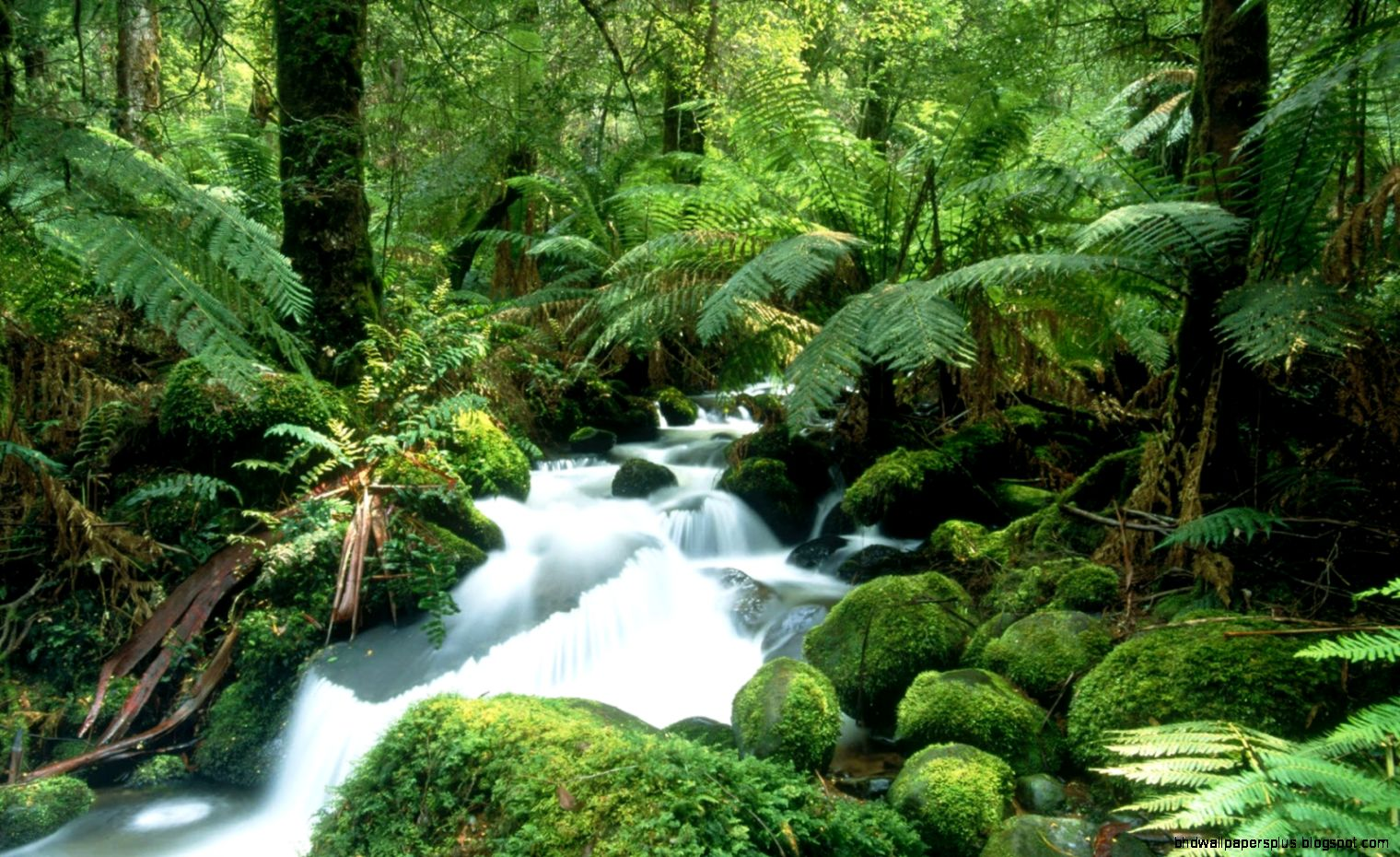 Amazon Tropical Rainforest Waterfall