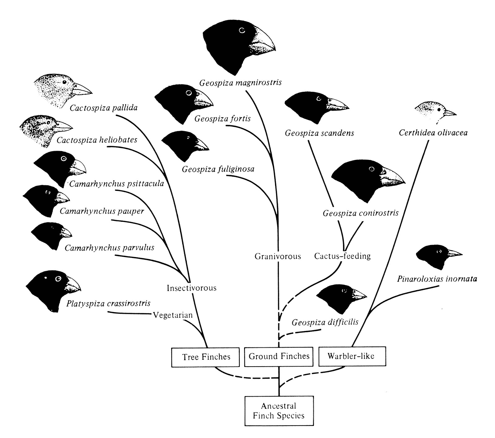an analysis of charles darwins theory of evolution by natural and sexual selection Mate choice and sexual selection: charles darwin laid the foundation for all modern years ago in on the origin of species by means of natural selection (1).