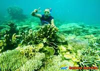 coral di laut karimun jawa