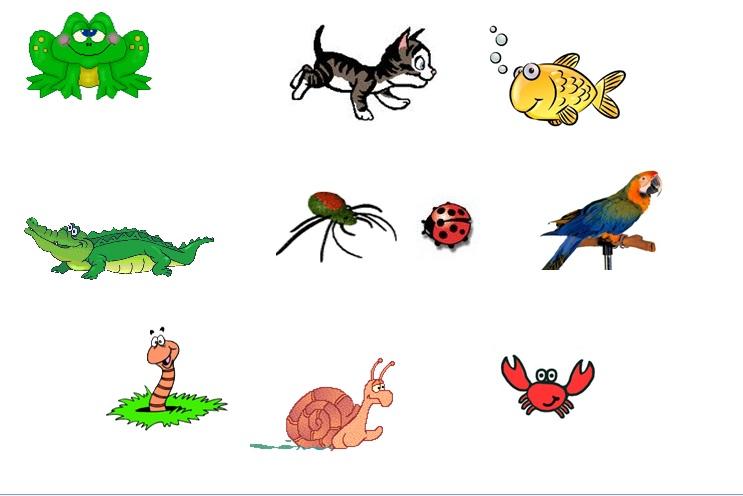 Clasificacion De Los Animales Vertebrados E Invertebrados.
