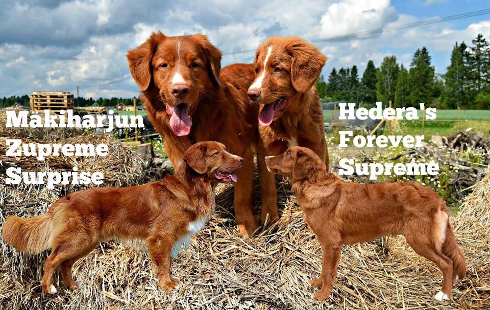Mäkiharjun Zupreme Surprise & Hedera's Forever Supreme