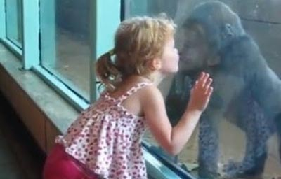 Little Girl Kisses a Baby Gorilla – CUTE VIDEO