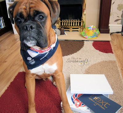 boxer dog wearing bandana supporting olympics london 2012 team gb red white and blue cute dog clothes