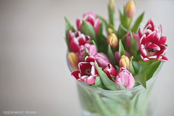Tulpen Blumen Frühling