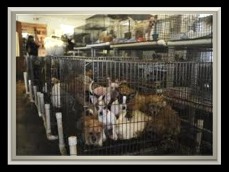 PUPPY MILL RAID WITH SAME CONDITIONS OF NEWPORT PUPPY SUPPLIERS STATED ON RECORD TO COUNCIL