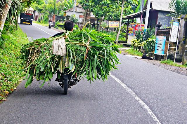 Motos-camiones de Bali