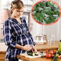 Thực hư ăn rau ngót gây sảy thai