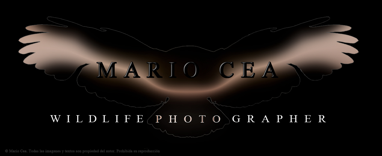 Mario Cea - Fotografía de Naturaleza