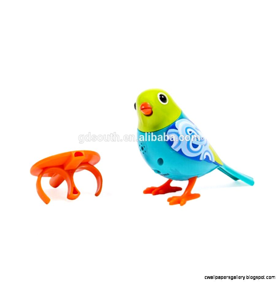 Newest Little Live Pet Birds   Buy Pet BirdsLittle Pet Birds