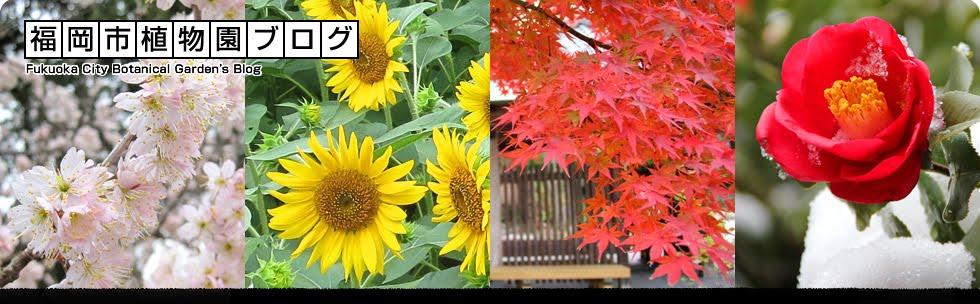 福岡市植物園ブログ