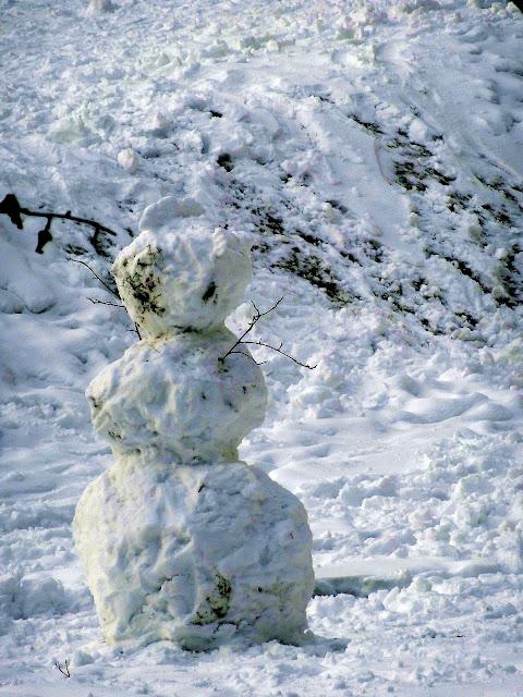 Zima w Tarnowieckim lesie.
