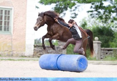 Horse vision. (Sunny Boy & Rebecca)