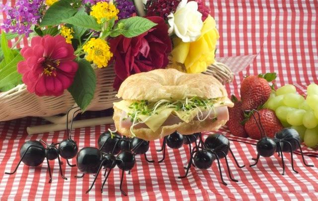 rimedi anti formiche naturali