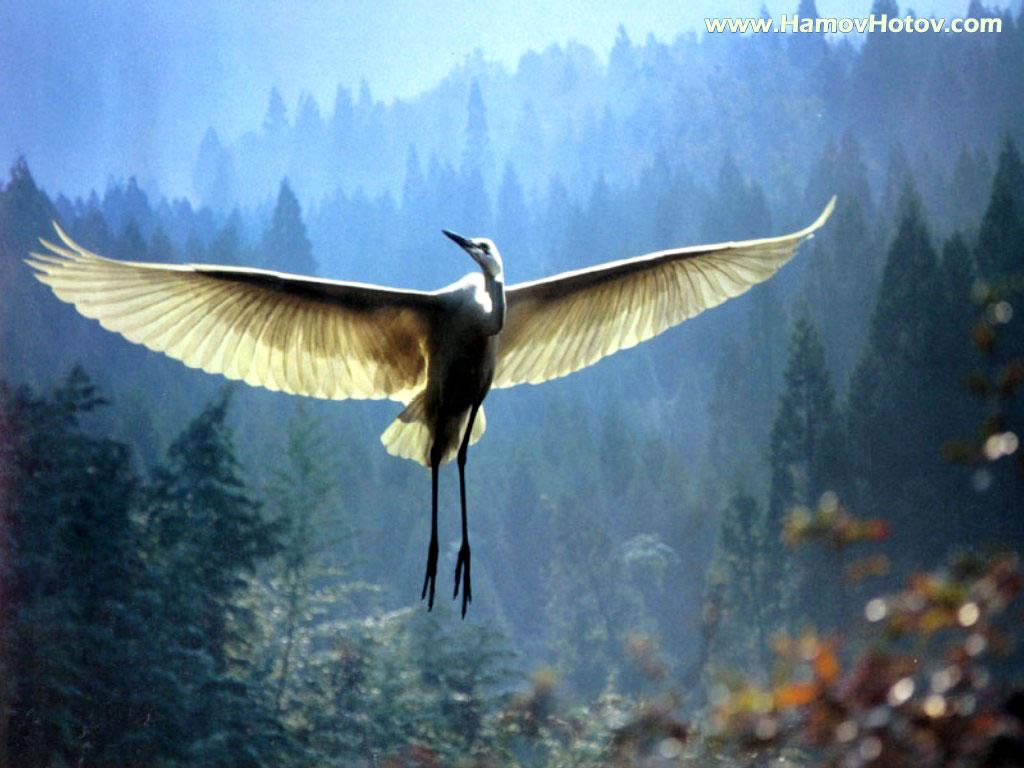 http://3.bp.blogspot.com/-SPNYx-EZgLw/T-pbkHSpRyI/AAAAAAAAGVk/VHfOFN-D2Lg/s1600/Bird-wallpaper-11.jpg